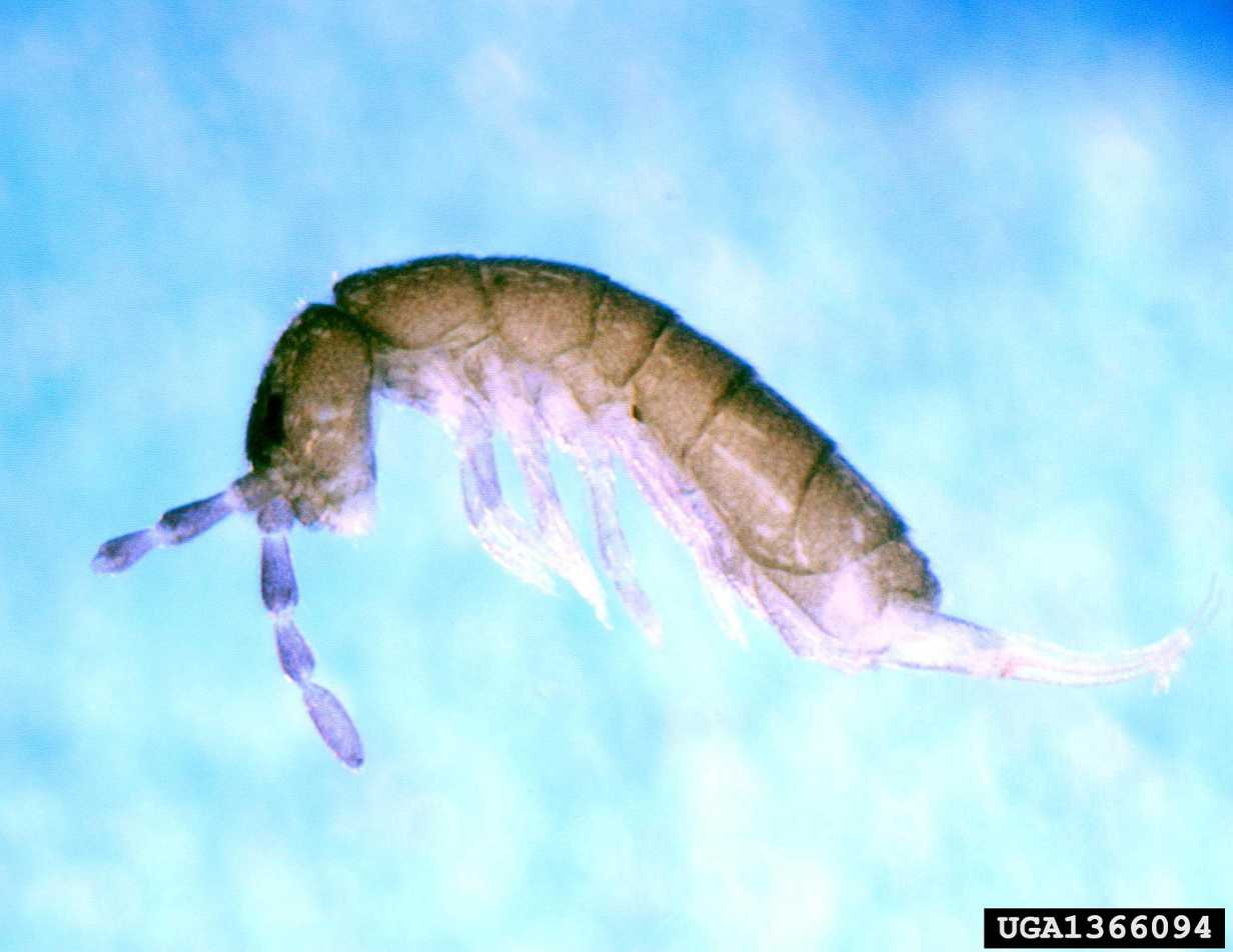 Springtails or Fleas? Part One | South Jersey Termite & Pest Control ...