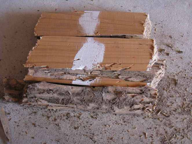 Termite damage and frass